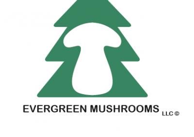 Evergreen Mushrooms