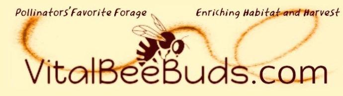 Vital Bee Buds